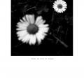 01-fleur-noir-et-blanc